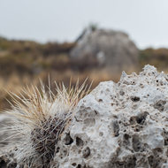 Cactus and rock clusters.