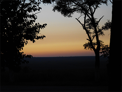 Thumbnail image of Sunset and trees.