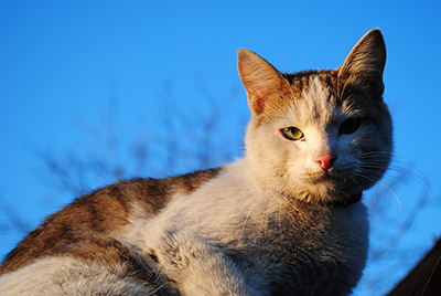 Thumbnail image ofCat on a background of sky.