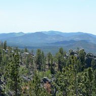 A view of the Black Hills from the Needles Highway