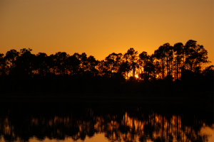 Thumbnail image ofSunset at Grassy Waters Preserve.
