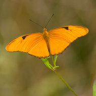 Butterfly in the Everglades