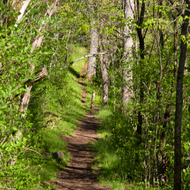 Path through Shenandoah National Park in the Spring.