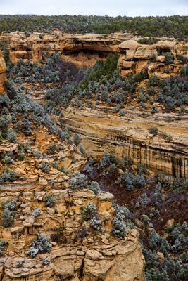 Thumbnail image ofCliff Palace dwellings from Sun Point.