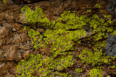 Thumbnail image of Lichen is almost fluorescent on the granite.