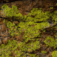 Lichen is almost fluorescent on the granite.