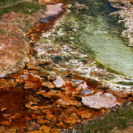 Red and green algal growth in the hot waters of the hot springs