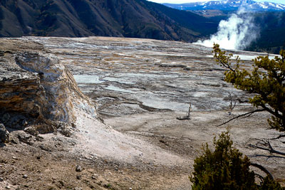 Thumbnail image ofMammoth Hot Springs terraces.