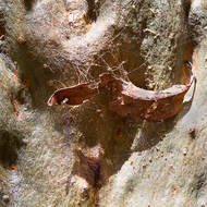 Web and bark and eucalypt.