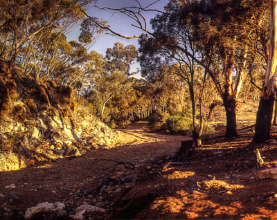 Thumbnail image ofDry creek bed and stunted eucalypts.