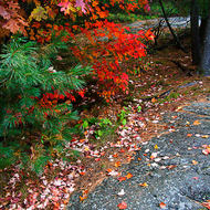 Fall colors on the exposed Canadian shield.
