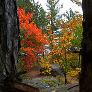 Fall colors and Canadian shield.