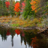 A beaver dam reflects the fall colors.