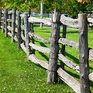 Pumpkin farm fenceline.