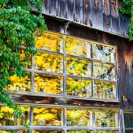 Reflections of fall color in the barn window.