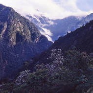 Rugged jungle mountains 11,000 feet above sea level.