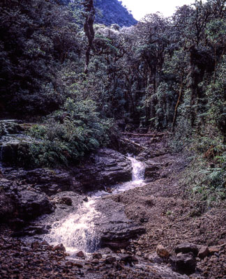Thumbnail image of Mountain stream after the sudden onset of rain.