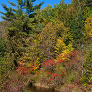 Fall colors around the Millstream.
