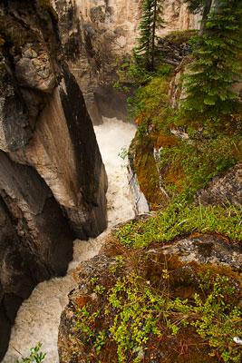 Thumbnail image ofSunwapta River.