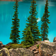 Three trees at Moraine Lake.