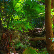 Dappled sun through the ferns on the floor of Carnarvon Gorge.