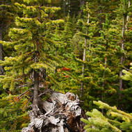 Growth and regrowth along the Yoho River.