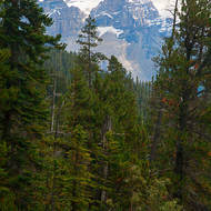 forest and peaks beside the Yoho River.