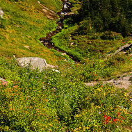 Gently sloping valley down from Logan Pass.