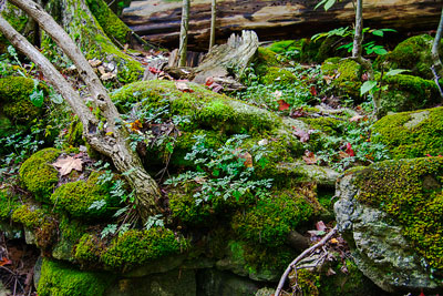 Thumbnail image ofMoist conditions, ideal for the moss to grow in...