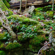 Moist conditions, ideal for the moss to grow in the woods.