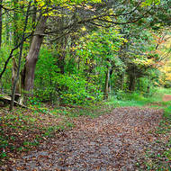 Cross country trail in early fall.