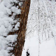 Fresh snow clings to a tree.