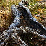 Fallen paperbark tree, now home to reptiles and spiders.