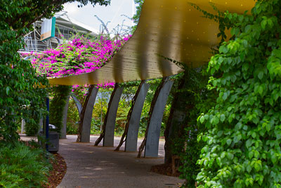 Thumbnail image of Bougainvillea covered walkway leads to the Piazza...