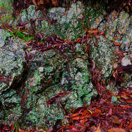 Rocky lichen covered rock in the rain.