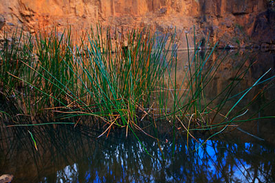 Thumbnail image ofReeds in the water filled open pit of an old copper...
