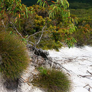 Sandhills and vegetation of Stradbroke Island.