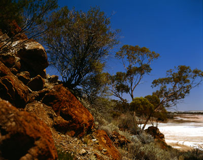Thumbnail image ofStunted trees in the arid country overlook a dry...