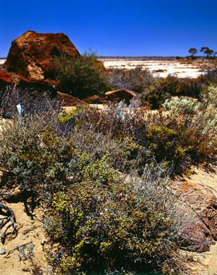 Thumbnail image ofSalt bush, salt pan, red rock and blue sky.