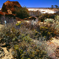 Salt bush, salt pan, red rock and blue sky.