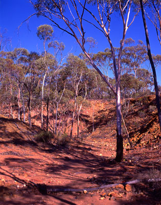 Thumbnail image ofGums trees, red rocks, dry creek bed and blue...