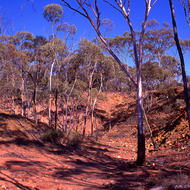 Gums trees, red rocks, dry creek bed and blue sky.