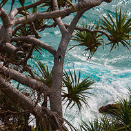 Turbulent sea and peaceful Pandanus tree, pandanus utilis.