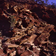 Exposed laterite sediments.