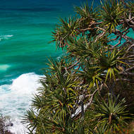 Looking east, Pandanus trees and ocean water.