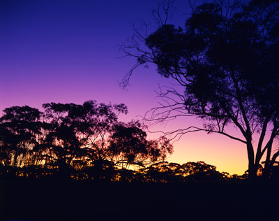 Thumbnail image ofDesert sunset, not a cloud in the sky above the...