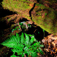 A small fern thrives from the rainforest floor.