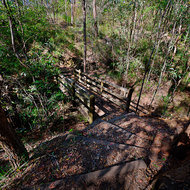 Walking track and wooden bridge through Toohey State Forest.