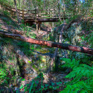 Walking track and wooden bridge through Toohey State Forest at the point where a small spring nourishes a rain forest environment.