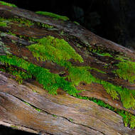 Soft furry moss in a secluded rain forest environment.
